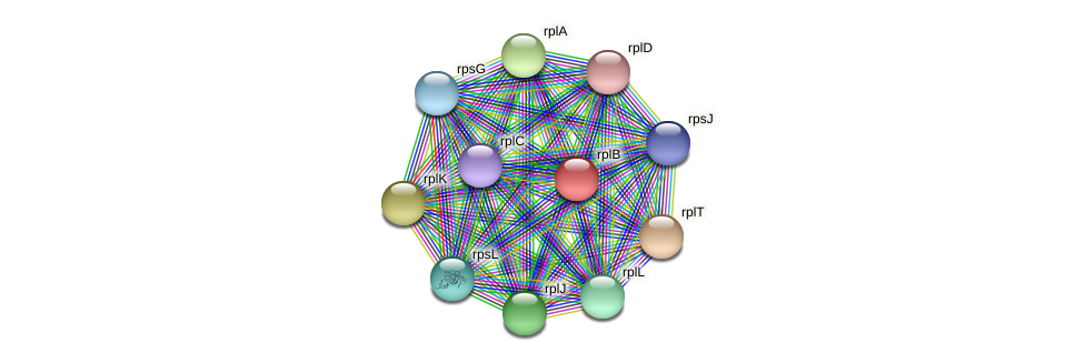 rplB protein (Alcaligenes faecalis) - STRING interaction network