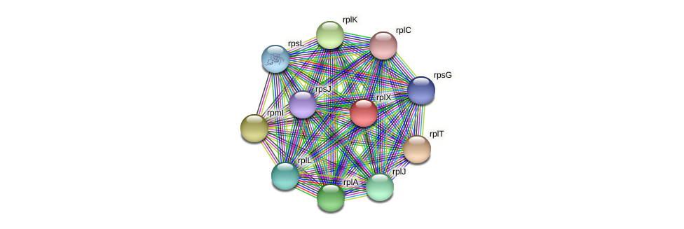 rplX protein (Alcaligenes faecalis) - STRING interaction network
