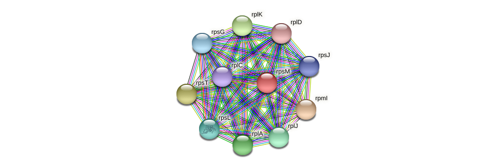 rpsM protein (Alcaligenes faecalis) - STRING interaction network
