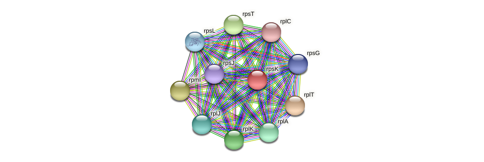 rpsK protein (Alcaligenes faecalis) - STRING interaction network