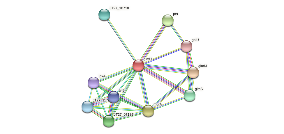 glmU protein (Alcaligenes faecalis) - STRING interaction network
