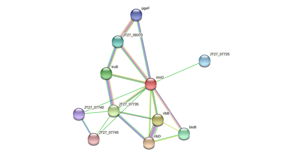 rimO protein (Alcaligenes faecalis) - STRING interaction network