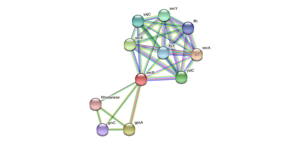 secB protein (Alcaligenes faecalis) - STRING interaction network