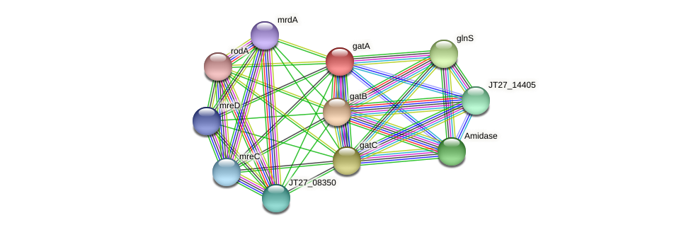 gatA protein (Alcaligenes faecalis) - STRING interaction network