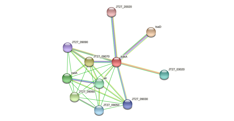 kdkA protein (Alcaligenes faecalis) - STRING interaction network