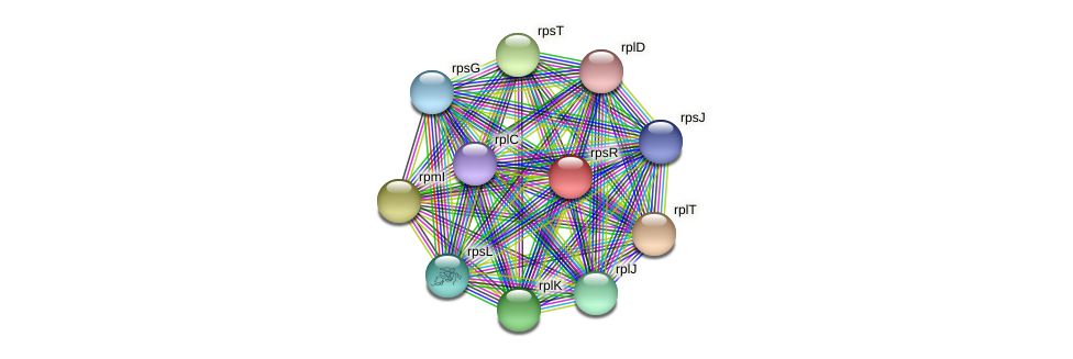 rpsR protein (Alcaligenes faecalis) - STRING interaction network