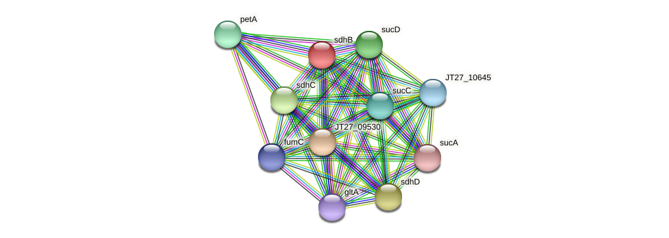 sdhB protein (Alcaligenes faecalis) - STRING interaction network