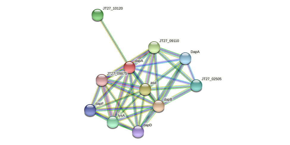 dapA protein (Alcaligenes faecalis) - STRING interaction network