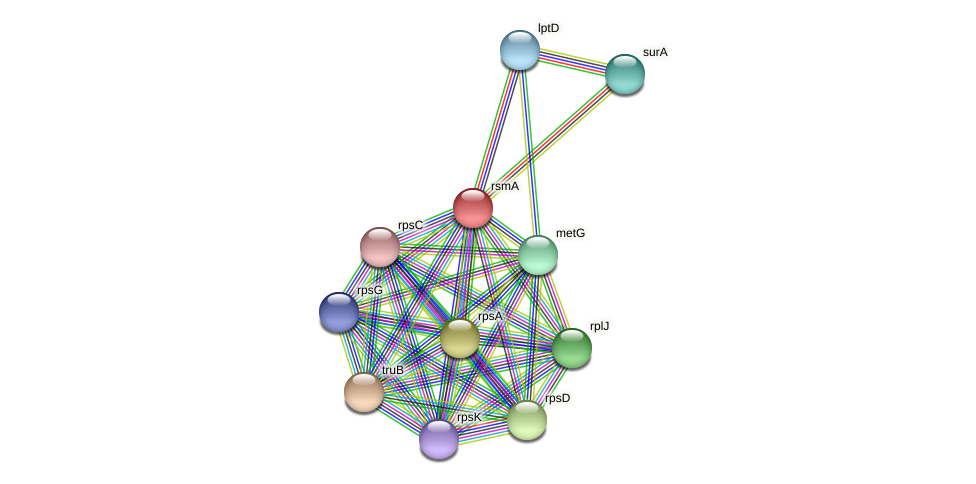 ksgA protein (Alcaligenes faecalis) - STRING interaction network