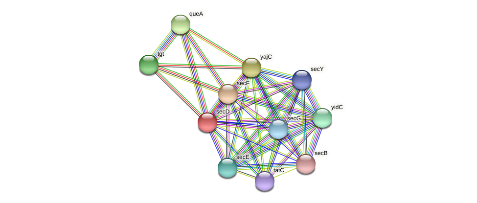 secD protein (Alcaligenes faecalis) - STRING interaction network
