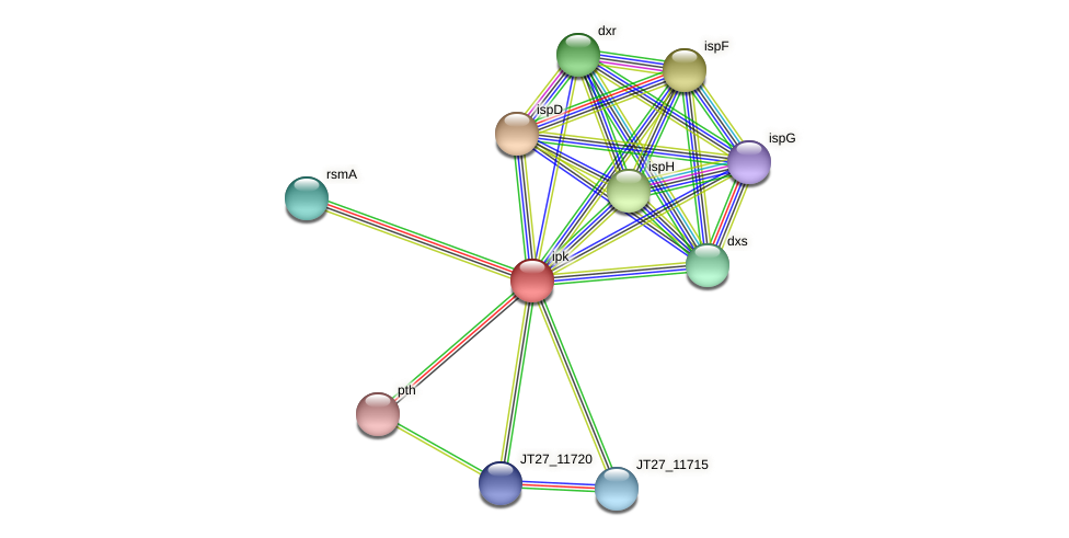 ipk protein (Alcaligenes faecalis) - STRING interaction network