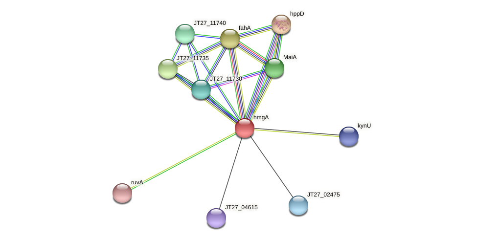 hmgA protein (Alcaligenes faecalis) - STRING interaction network