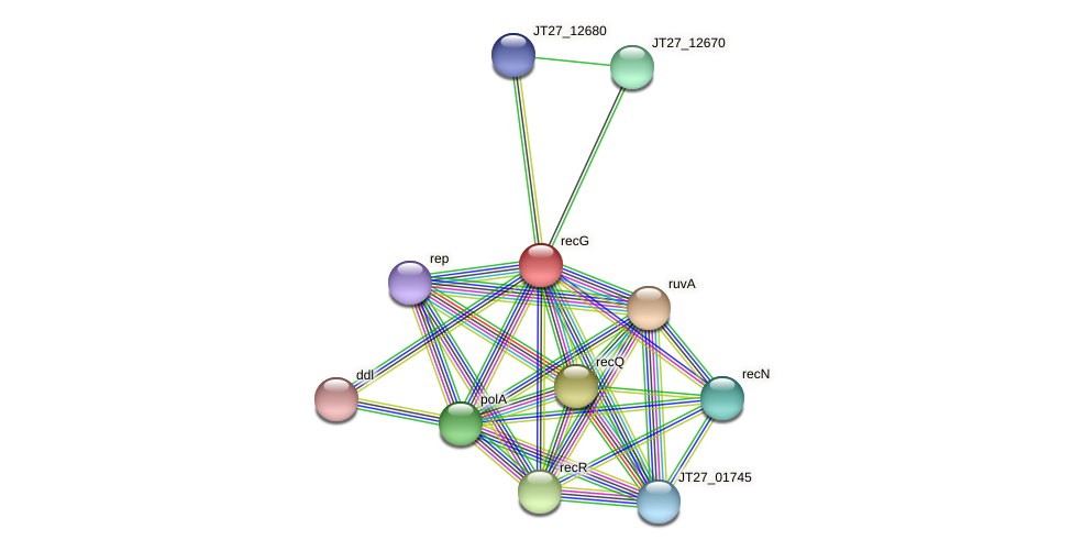recG protein (Alcaligenes faecalis) - STRING interaction network