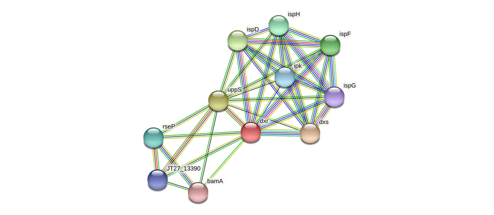 dxr protein (Alcaligenes faecalis) - STRING interaction network
