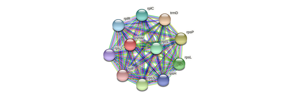 rimM protein (Alcaligenes faecalis) - STRING interaction network