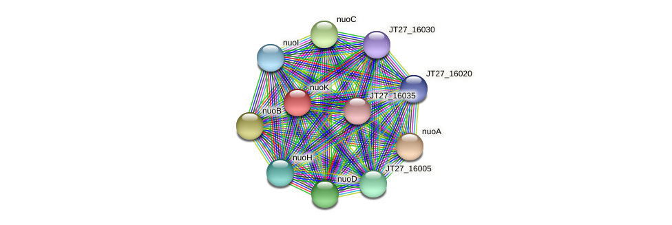 nuoK protein (Alcaligenes faecalis) - STRING interaction network