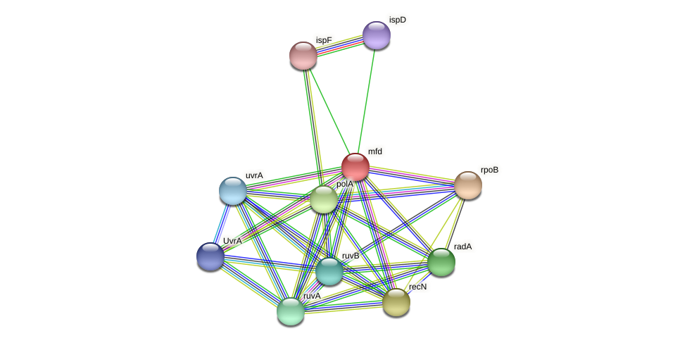 mfd protein (Alcaligenes faecalis) - STRING interaction network