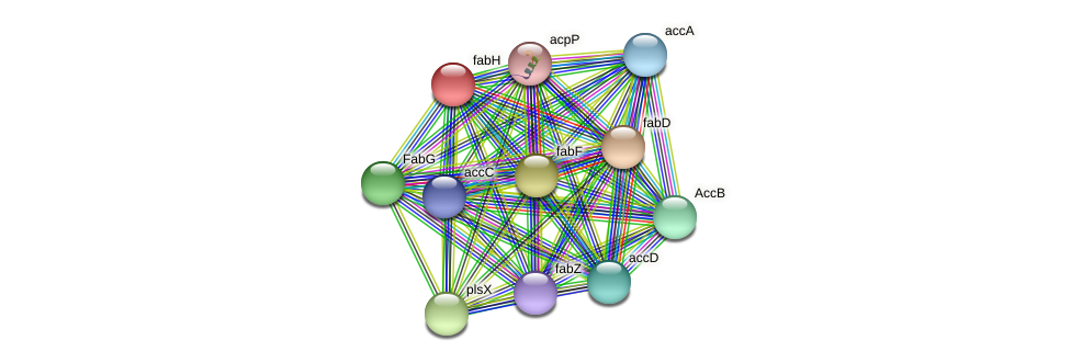 fabH protein (Alcaligenes faecalis) - STRING interaction network