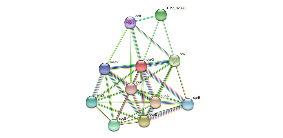 pyrG protein (Alcaligenes faecalis) - STRING interaction network
