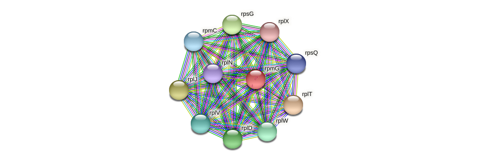 rpmG protein (Alcaligenes faecalis) - STRING interaction network