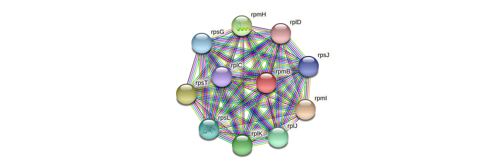 rpmB protein (Alcaligenes faecalis) - STRING interaction network