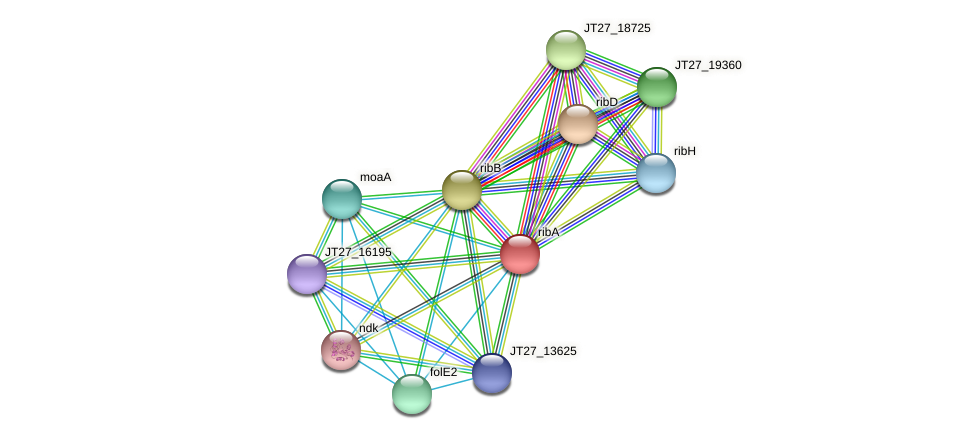 ribA protein (Alcaligenes faecalis) - STRING interaction network