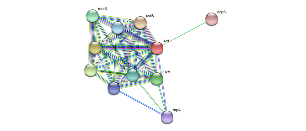 uvrC protein (Alcaligenes faecalis) - STRING interaction network