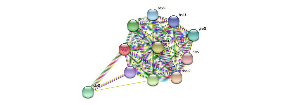 clpB protein (Alcaligenes faecalis) - STRING interaction network