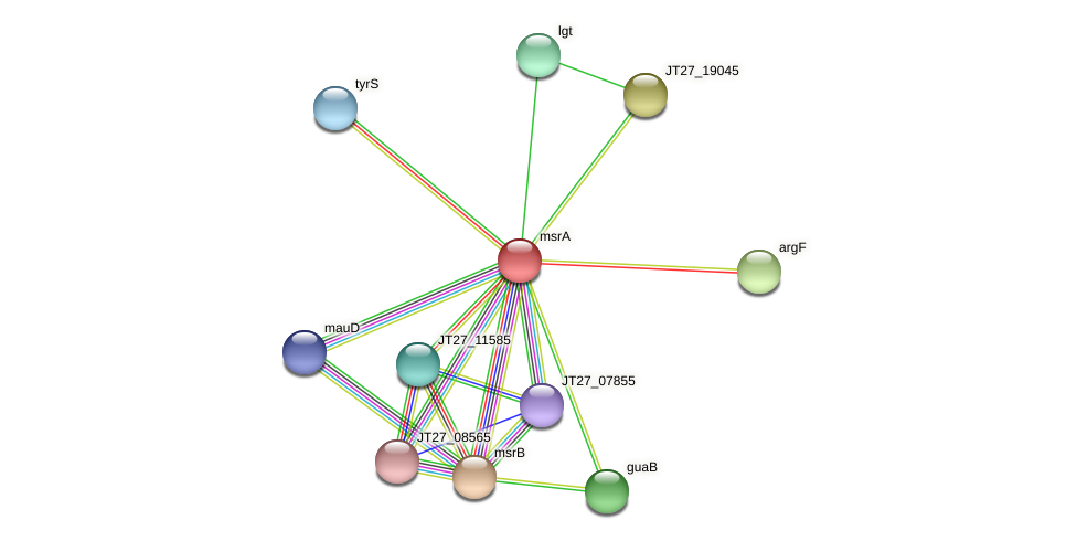 msrA protein (Alcaligenes faecalis) - STRING interaction network