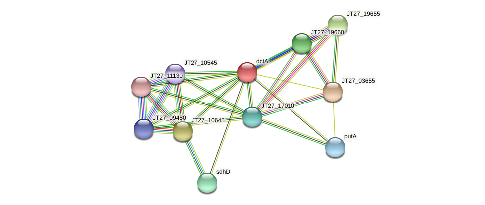 dctA protein (Alcaligenes faecalis) - STRING interaction network
