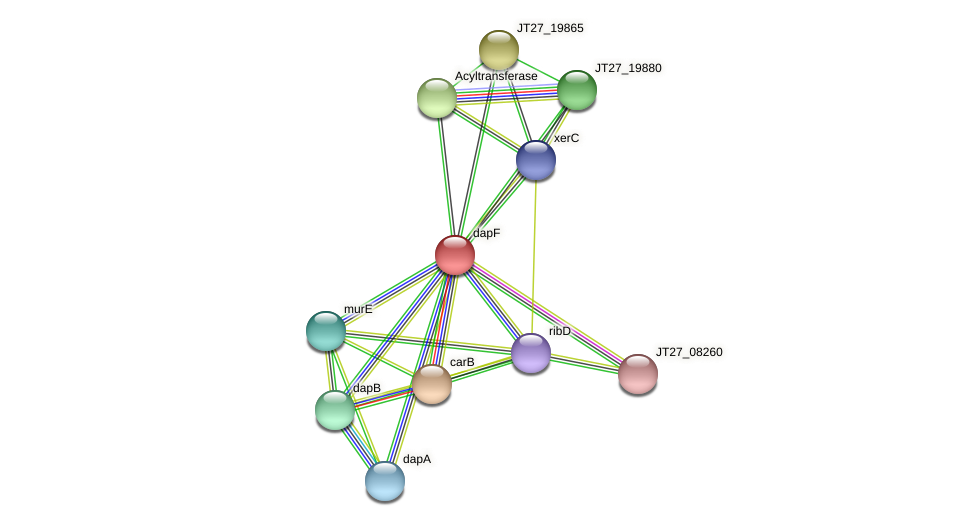 dapF protein (Alcaligenes faecalis) - STRING interaction network
