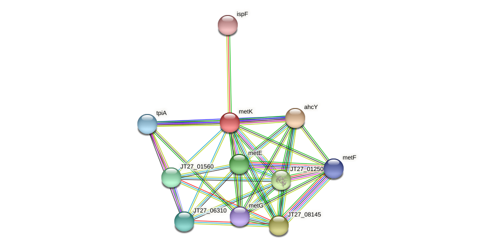 metK protein (Alcaligenes faecalis) - STRING interaction network