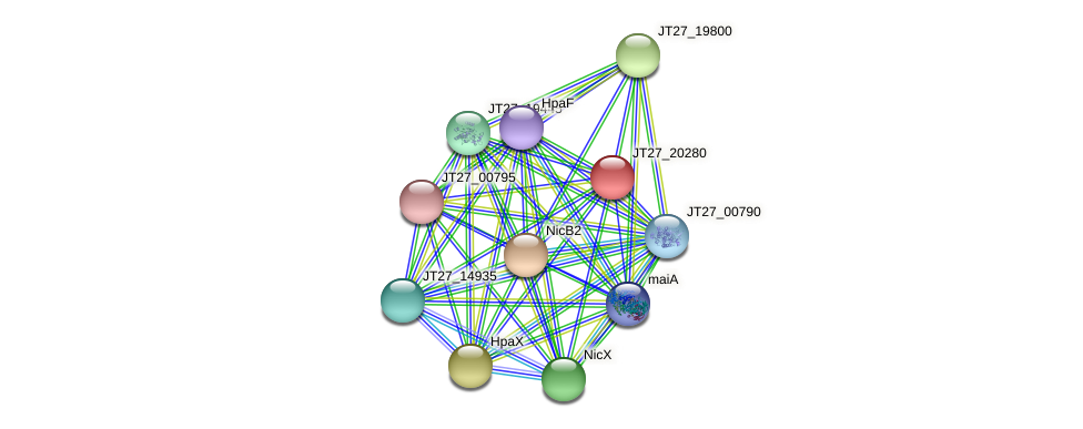 JT27_20280 protein (Alcaligenes faecalis) - STRING interaction network