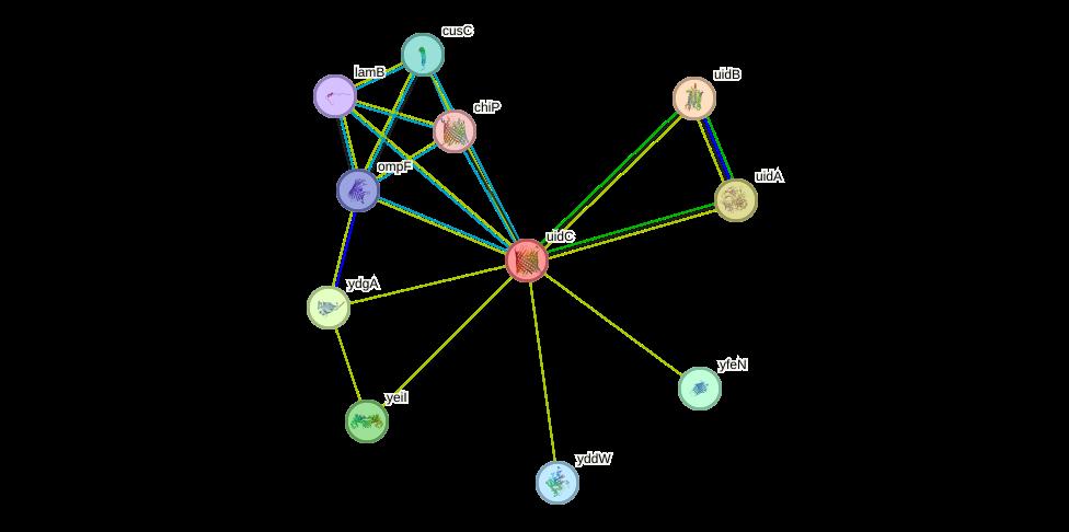 defdc003ebd2 uidC protein (Escherichia coli K12 MG1655) - STRING interaction network
