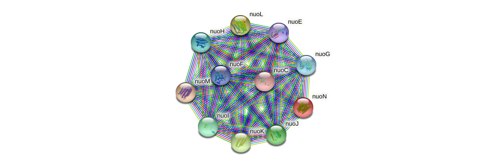 nuoN protein (Escherichia coli K12 MG1655) - STRING interaction network