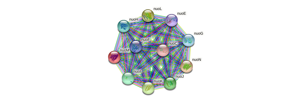 STRING protein interaction network