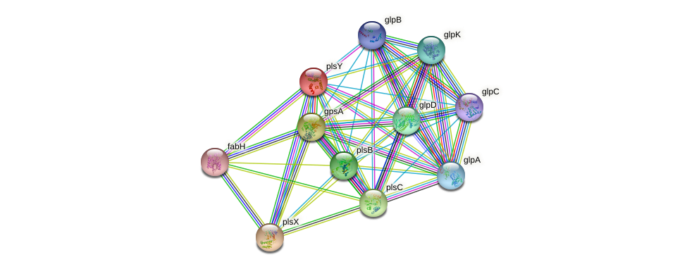 plsY protein (Escherichia coli K12 MG1655) - STRING interaction network