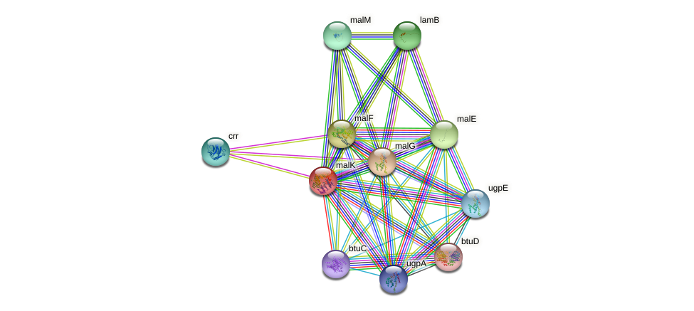 malK protein (Escherichia coli K12 MG1655) - STRING interaction network