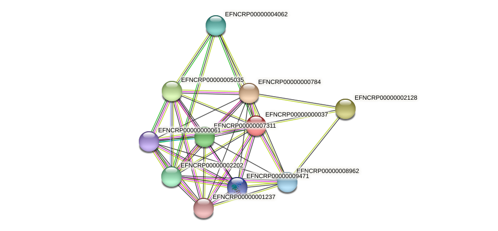 EFNCRP00000000037 protein (Neurospora crassa) - STRING interaction network
