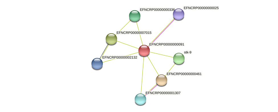 EFNCRP00000000091 protein (Neurospora crassa) - STRING interaction network