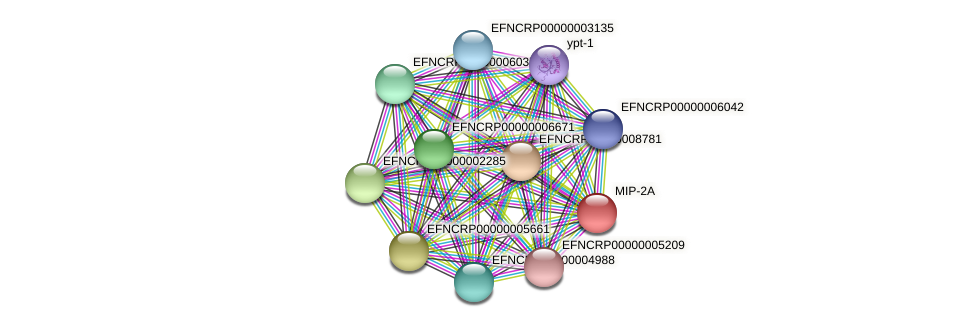 EFNCRP00000000100 protein (Neurospora crassa) - STRING interaction network