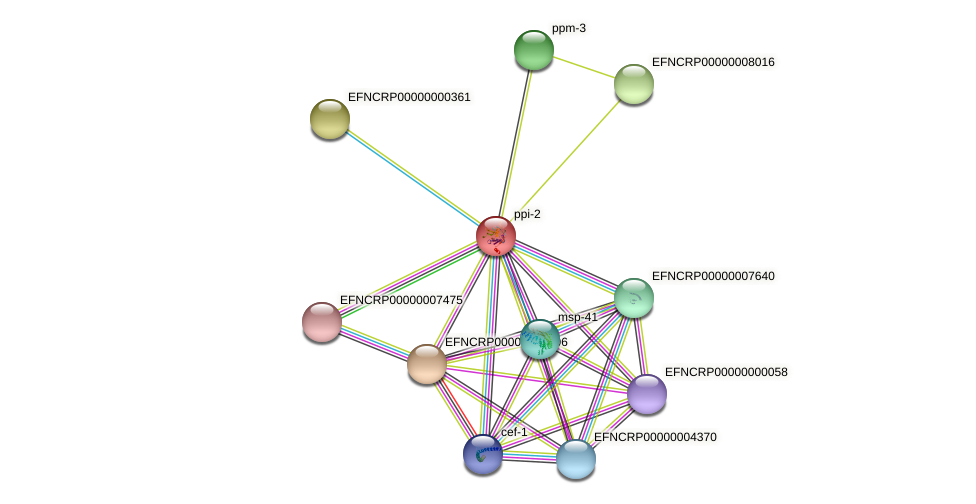 EFNCRP00000000156 protein (Neurospora crassa) - STRING interaction network