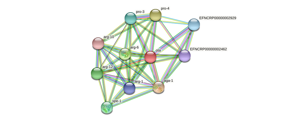 ota protein (Neurospora crassa) - STRING interaction network