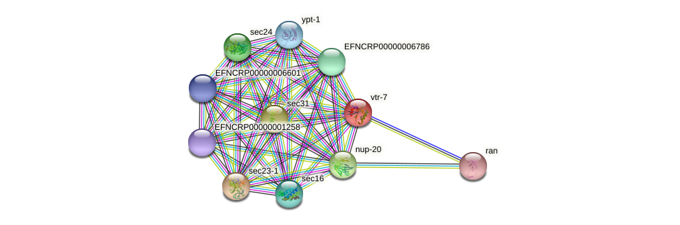 EFNCRP00000000290 protein (Neurospora crassa) - STRING interaction network
