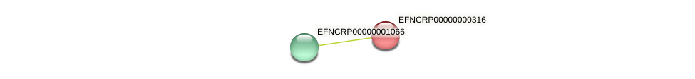 EFNCRP00000000316 protein (Neurospora crassa) - STRING interaction network