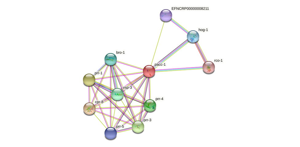 EFNCRP00000000438 protein (Neurospora crassa) - STRING interaction network