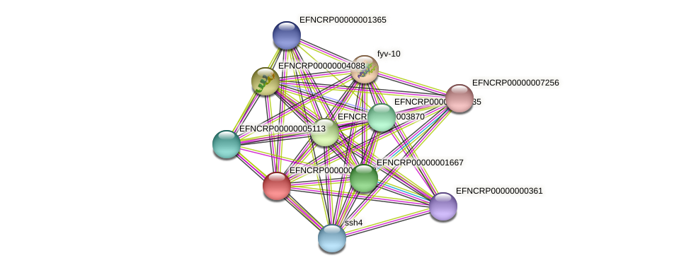 EFNCRP00000000573 protein (Neurospora crassa) - STRING interaction network