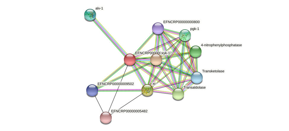 EFNCRP00000000677 protein (Neurospora crassa) - STRING interaction network