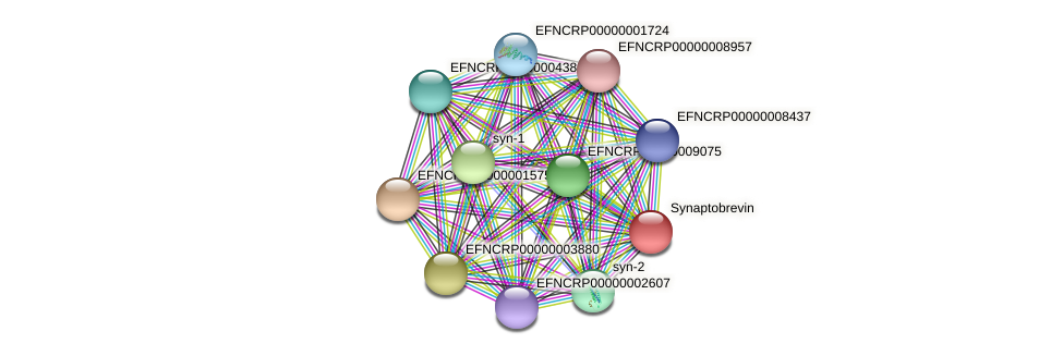 EFNCRP00000000678 protein (Neurospora crassa) - STRING interaction network
