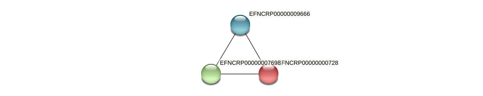 EFNCRP00000000728 protein (Neurospora crassa) - STRING interaction network